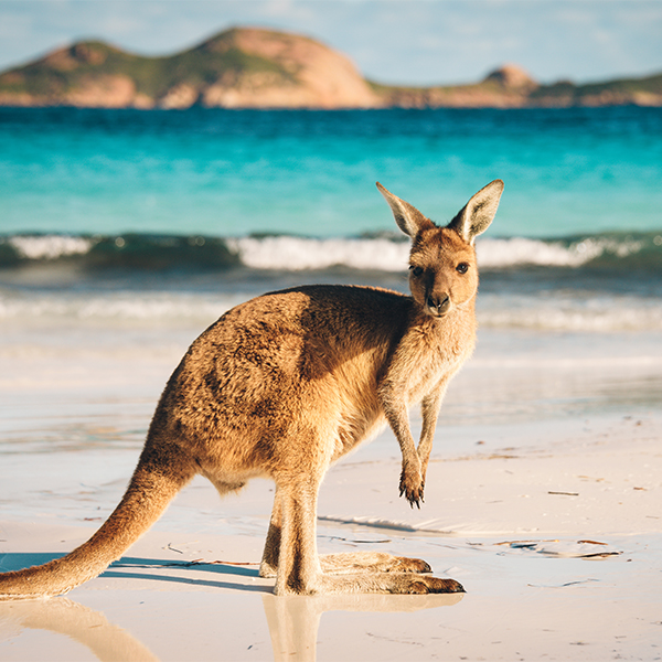 MSU – Australia – 2022