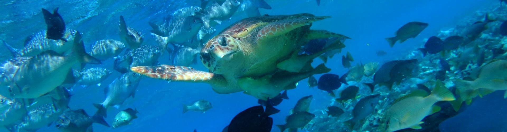 Belize: Environmental Science