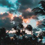 palme rep dominican