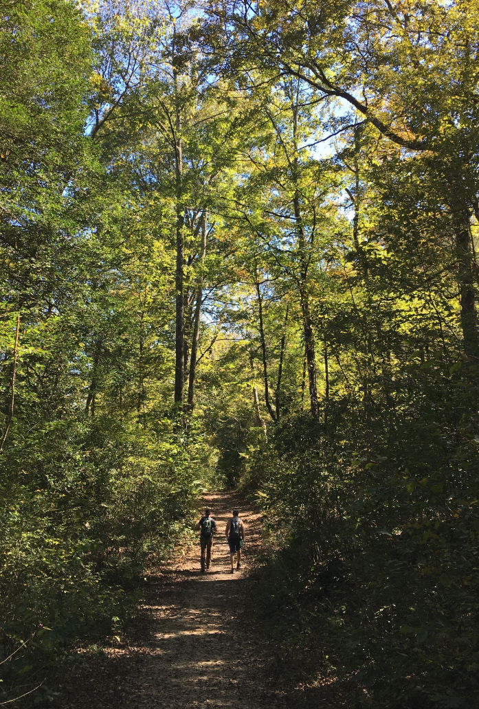 oklahoma_forest